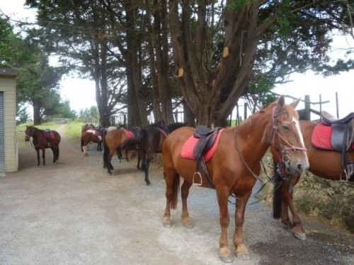 Horse Trek'n horses take equestrians on a horseback riding vacation