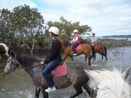 Horseback Riding Vacation at Bay of Islands, New Zealand