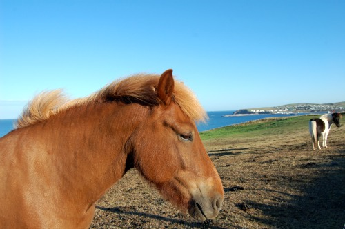 Horseback Riding Vacation on Iceland's Snaefellsness Peninsula