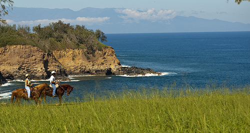 Hawaiian Paso Fino Gaits on a Big Island Horseback Riding Vacation