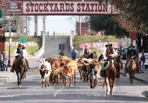 There's more to do in Fort Worth Texas during the Super Bowl - watch a cattle drive