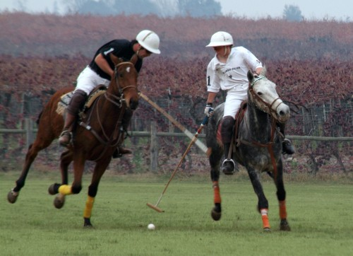Polo Ponies at Vina Casa Silva in Chile