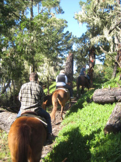 Horseback Riding Vacation through Del Monte Forest, Monterey, California