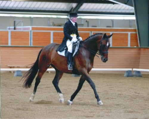 Walnut Creek Century Club Rider Mary Grace Davidson riding her horse Marquis in a dressage horseback riding competition