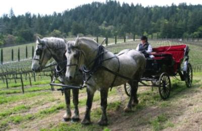 Not your ordinary horseback riding vacation in Calistoga at Castello di Amorosa