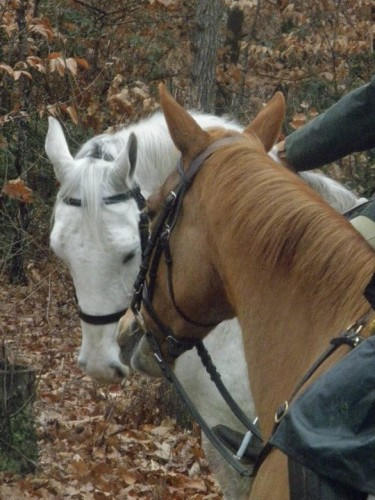 Horses and Wine at the Kentucky Bluegrass Wine Auction, Lexington, Kentucky