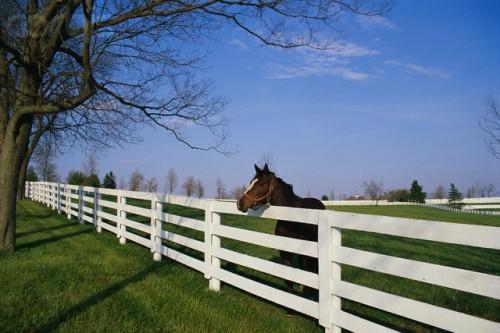 Dreaming of a horseback riding vacation in Lexington, Kentucky