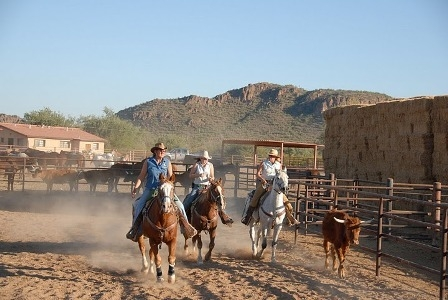 Team penning is one of the activities offered on an Arizona Dude Ranch horseback riding vacation
