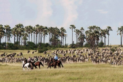 Riding with Zebras on a Horseback Riding Vacation in Botswana, Africa