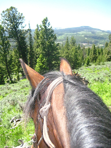 Spanky looks over the miles of Montana forest during a horseback riding vacation at the Club at Spanish Peaks in Big Sky