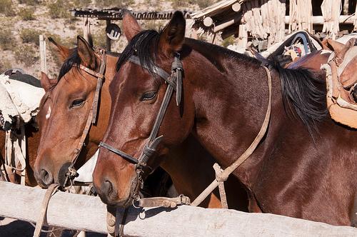 Horses dozing on a horseback riding vacation in Mendoza, Argentina