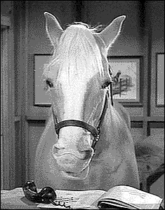 Mister Ed the talking horse takes a horseback riding vacation to the movie theater
