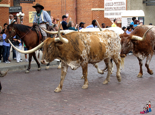 Visit the Fort Worth Stockyard and watch the cowboys and Longhorn cattle on this horseback riding vacation
