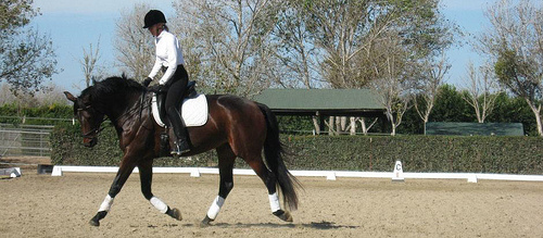 Immerse yourself in dressage at Charlotte Bredahl's ranch on a horseback riding vacation in Buellton, California