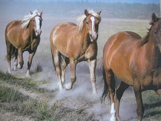 """Sunriver horses to pasture"""