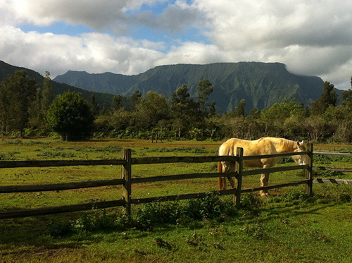 A horseback riding vacation in paradise at Silver Falls Ranch with Makaleha mountains in the distance.