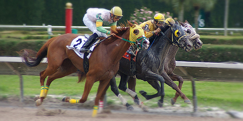 Expert tips to picking a winner at the horse races