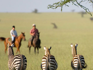 Zebras study horseback riders on vacation at Ol Donyo Lodge in Africa