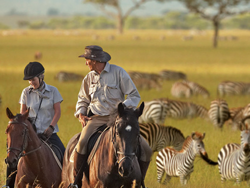 Imagine a horseback riding Safari in Africa with Zebras