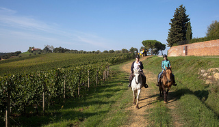 """Castellare di Tonda vineyard ride"""