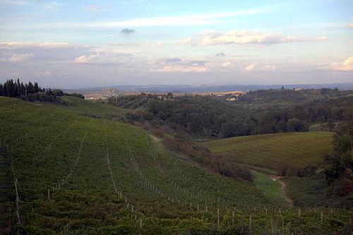"""""""Castellare di Tonda Vineyard"""""""