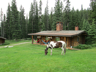 Lone Mountain Ranch horse