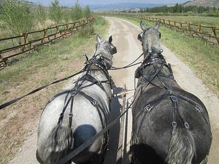 Jackson Fork Ranch Percheron horses