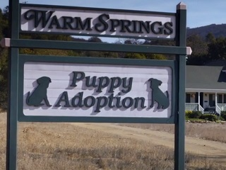 Warm Springs Ranch, puppy