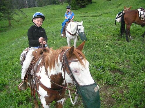 "horses, ""muzzle"""