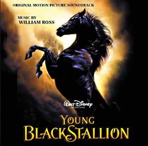 Young black stallion, horse