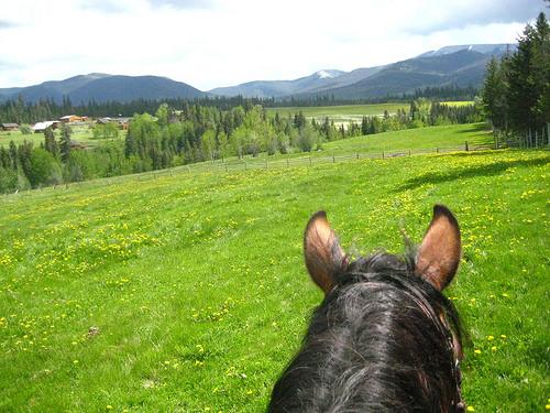 """""""Echo Valley Ranch"""" british columbia, canada"""
