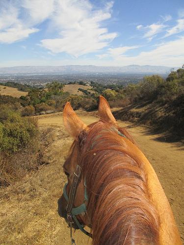 """""""Garrod Farms"""" horseback riding"""