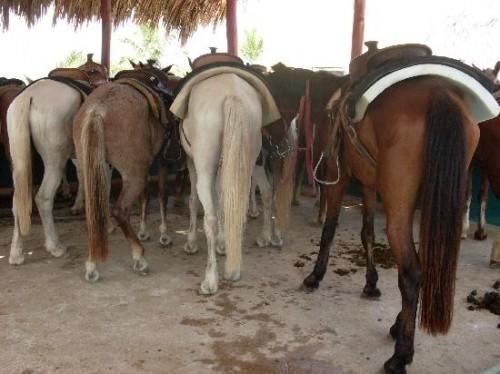 "horseback riding, ""Dominican Republic"""