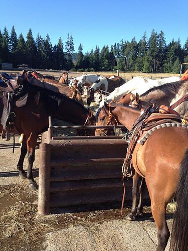 """Northwestern Lake Riding Stables"" horses"