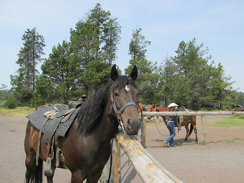 """sunriver stables"" horse"
