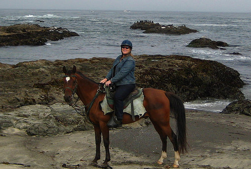 """Fort Bragg"" California, horse"