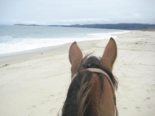 Thelma Poplar Beach HMB500x375