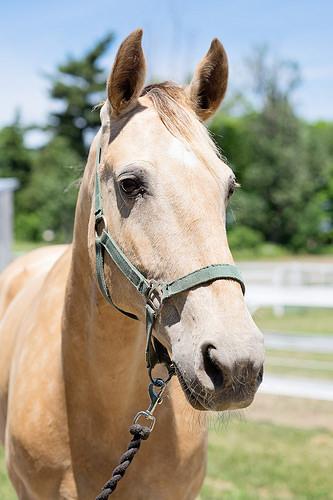 """""""Sari Therapeutic Riding"""" horse"""
