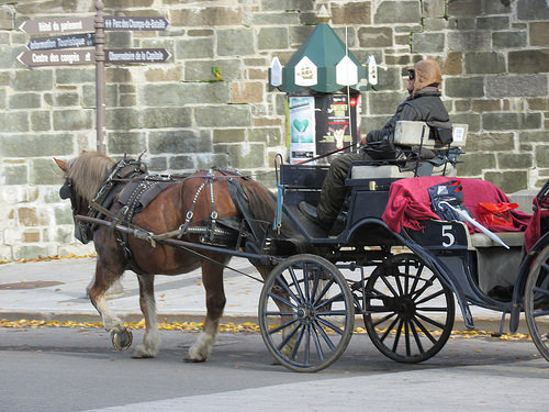 "draft horse, ""Quebec City"", Canada"