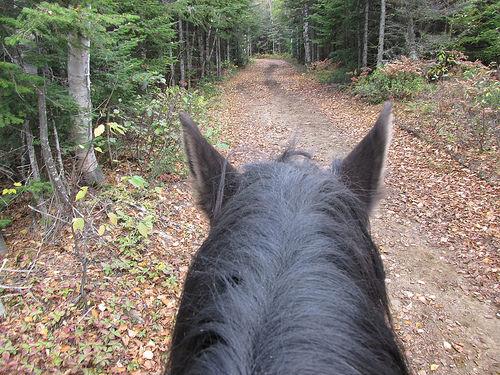 """""""Charlevoix"""" horseback riding, horse"""