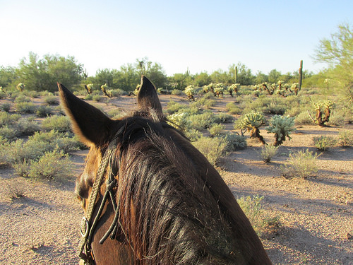 horse, MacDonald's Ranch, cactus, desert, Arizona