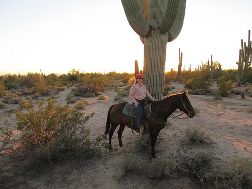 Nancy D. Brown, Saguaro cacti, Scottsdale, desert