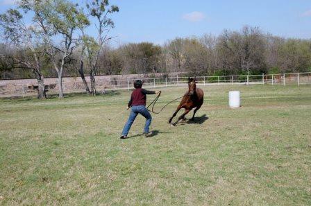 Melinda Folse, horse