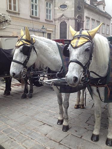 Hungarian Warmblood, horses, ,vienna, austria