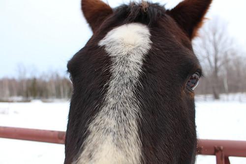 quarter horse, door county, wisconsin