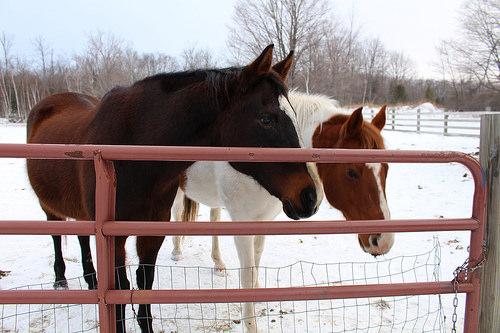 horses, Fish Creek, Wisconsin
