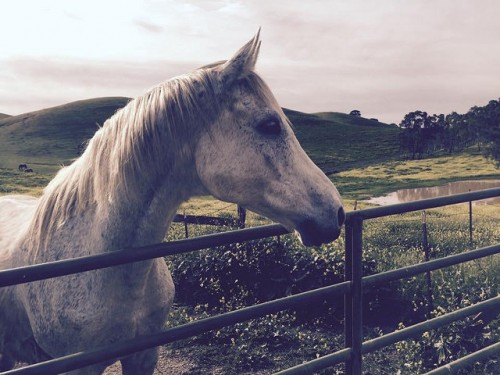 horse, fence, Northern California