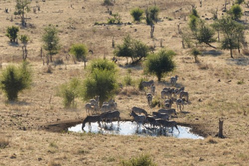 zebra migration, Africa, Chobe Forest Reserve