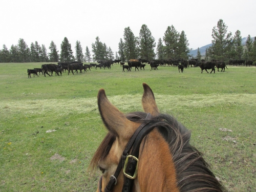 Triple Creek Ranch, Women's Rocky Mountain Rendezvous, between the ears