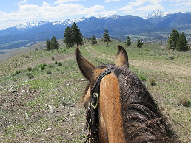 Triple Creek Ranch, Darby, Montana, between the ears